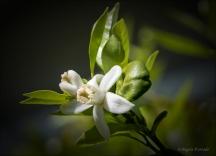 FlowerWeb-DSC_2816