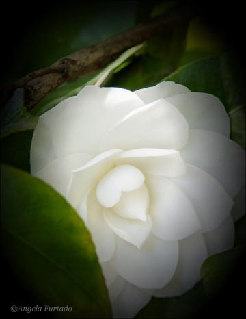 FlowerWeb-DSC_2844