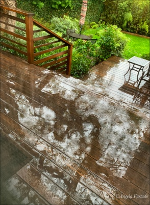 rainweb-img_0169